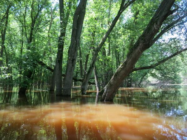 bark-river-wisconsin-canoeing-008