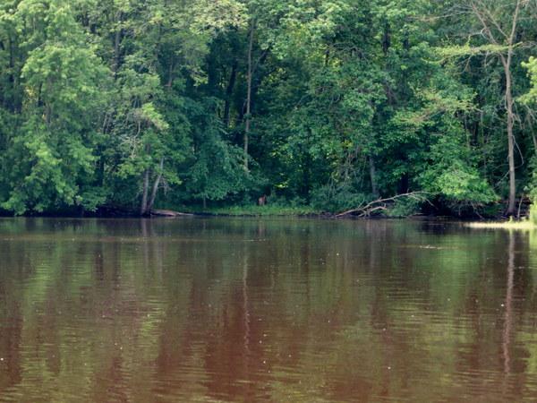 wolf-river-canoe-paddling-001