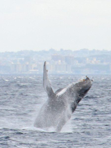 humpback-whale-okinawa
