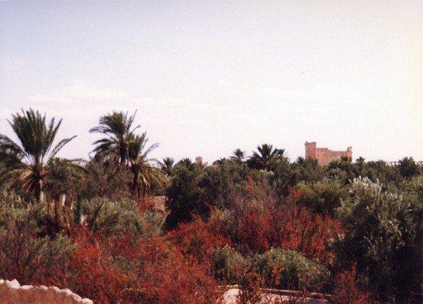 palmyra-syria-ruins-007