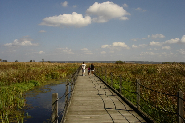 horicon-marsh-boardwalk