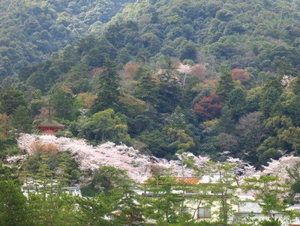 sakura-miyajima_2858