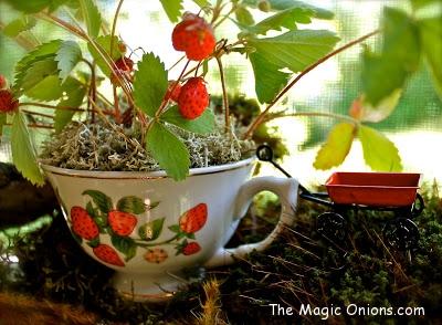 Magical Fairy Garden : www.theMagicOnions.com