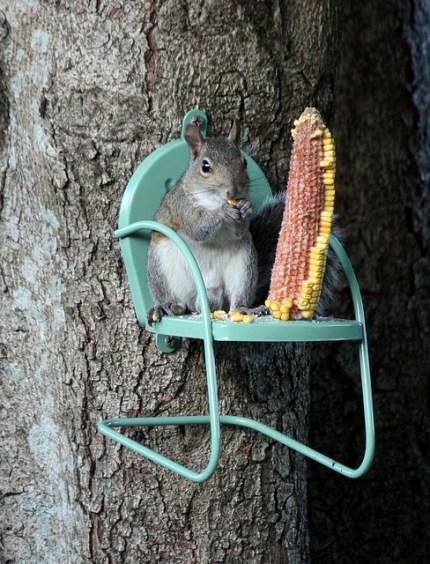 Cute Squirrel Feeder : The Magic Onions : www.theMagicOnions.com