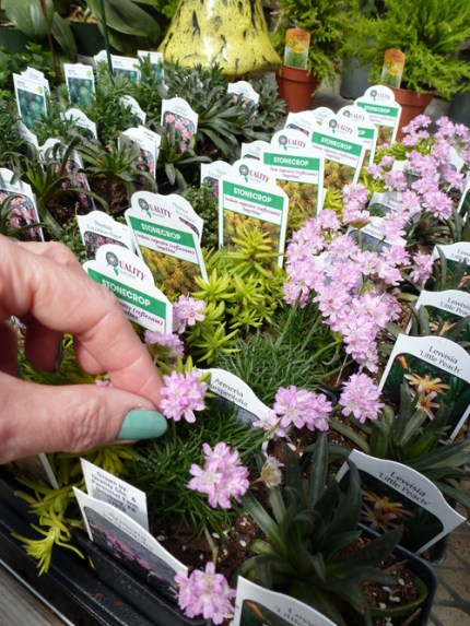 Choosing plants for your Fairy Garden : www.theMagicOnions.com