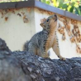 Teaching Timone How To Climb