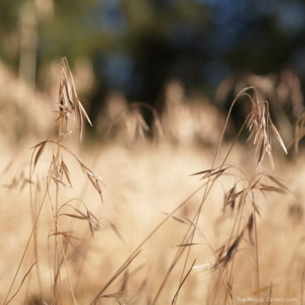 photo of Autumn wheat