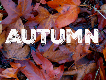 Fall : www.theMagicOnions.com