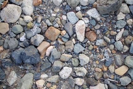 Nature Photos -- www.theMagicOnions.com