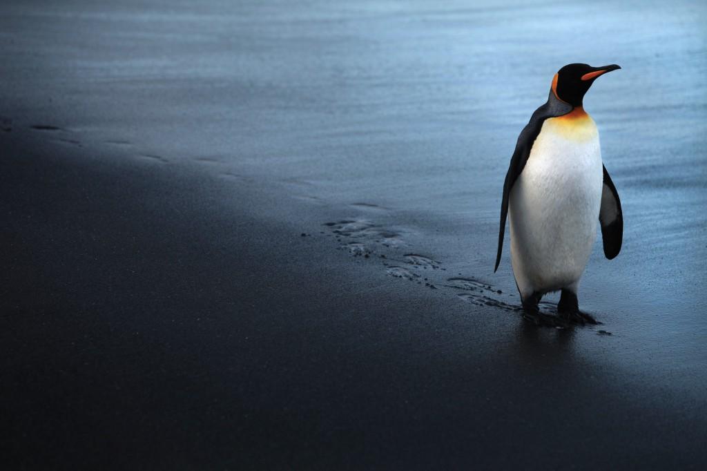 PenguinKing_6