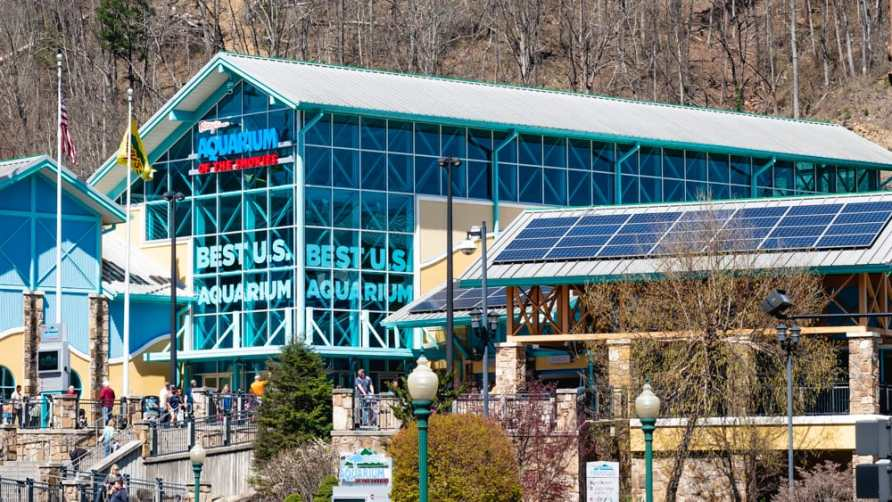 ripley's aquarium of the smokies gatlinburg tennessee