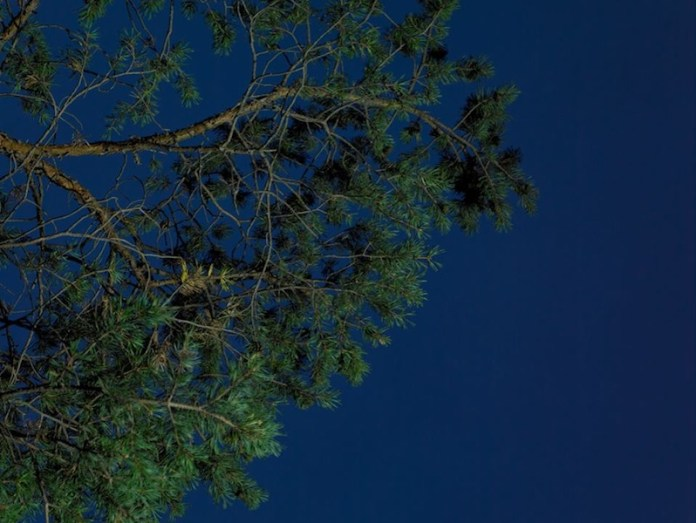 Corrispondenze planetarie, Cristina Serra