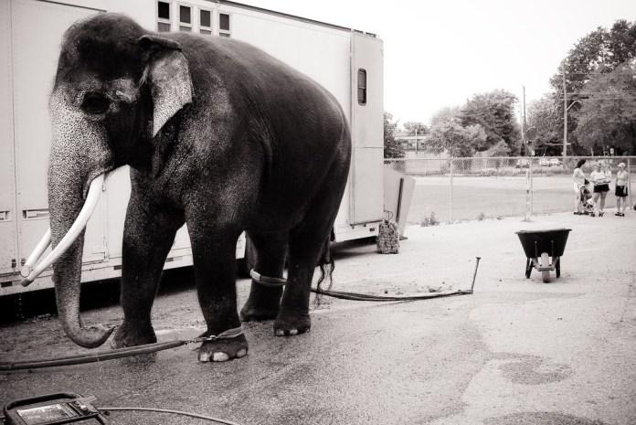 We Animals © JMcArthur