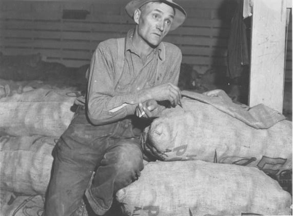 Klamath Basin potato farmer, Tulelake Calif, Oct. 1939