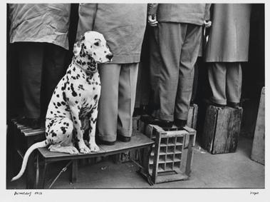 Walter Vogel Cane dalmata Düsseldorf, 1956 © Walter Vogel