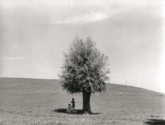 Fulvio Roiter L'uomo e l'albero, 1950 © Archivio Storico Circolo Fotografico La Gondola Venezia