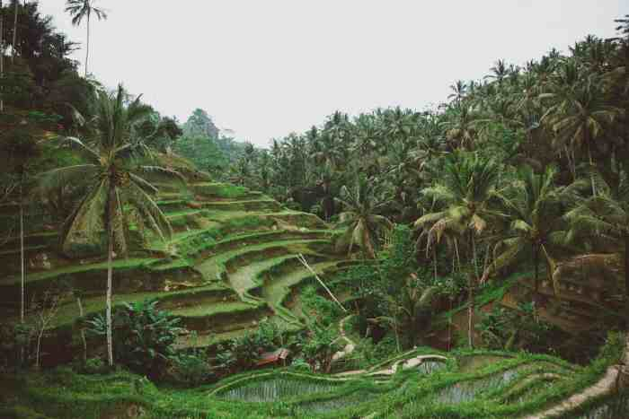 6 Culturally Rich Things to Do in Bali