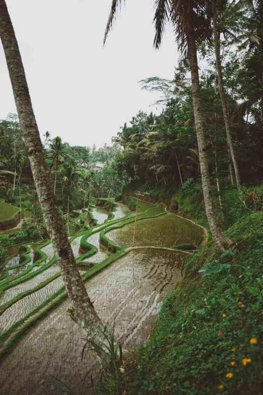 tegalalang rice terraces ubud bali14