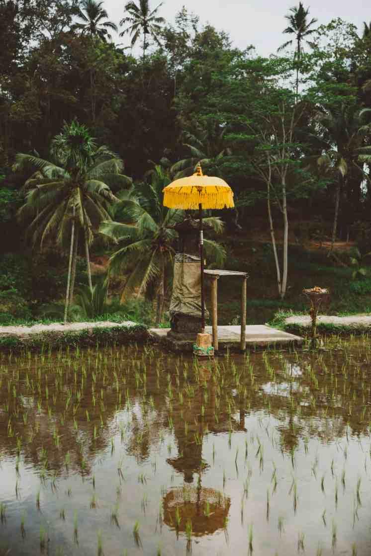 tegalalang rice terraces ubud bali 17