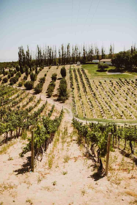 Exploring Idaho Wineries - Bitner Vineyards - TheMandagies.com