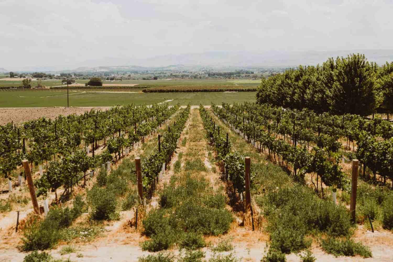 Exploring Idaho Wineries - Koenig Vineyards - The Mandagies