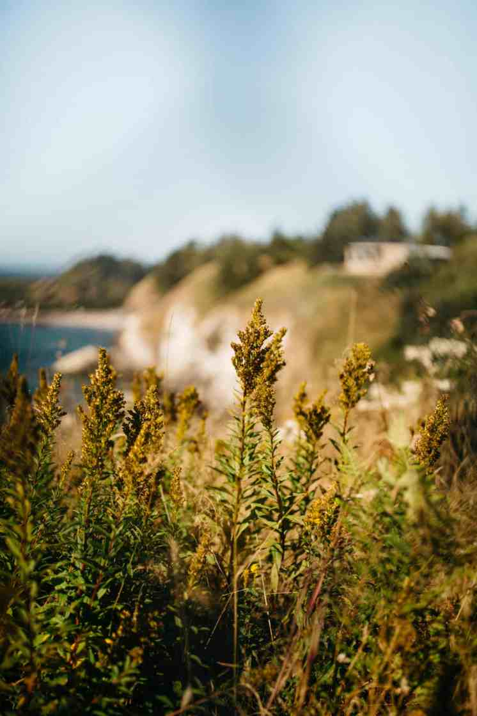 Ocean Shores (1 of 1)