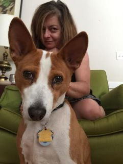 Vicki takes comfort from her basenji, Ramsey. The basenji is from the Congo, the only barkless dog in the world, and perfect for people with headaches.