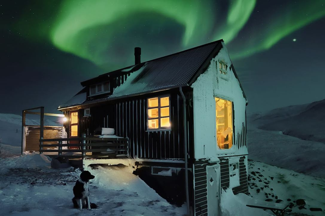 cabin northern lights dog