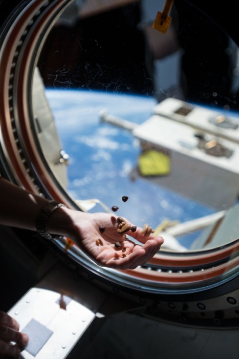 Snacking in Orbit