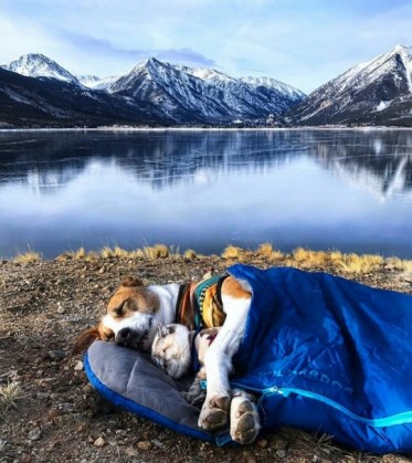 cat and dog sleeping in sleeping bag near mountain lake
