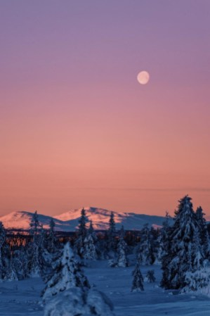 cold mountain scene with moon and trees