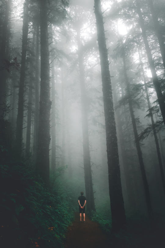 man standing among redwoods and fog