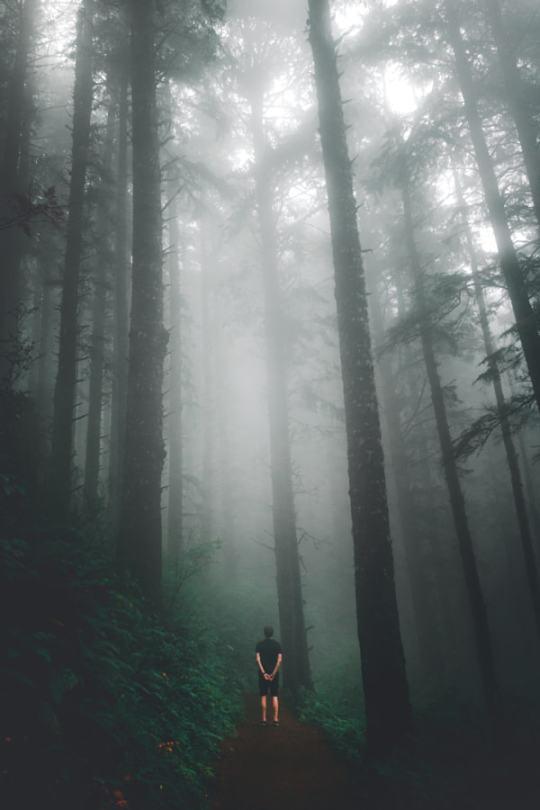 man standing among redwoods and fog
