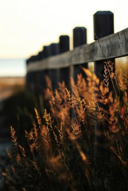 old fence leading to beach