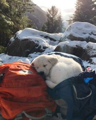 puppy catching a nap on a backpack in the snow
