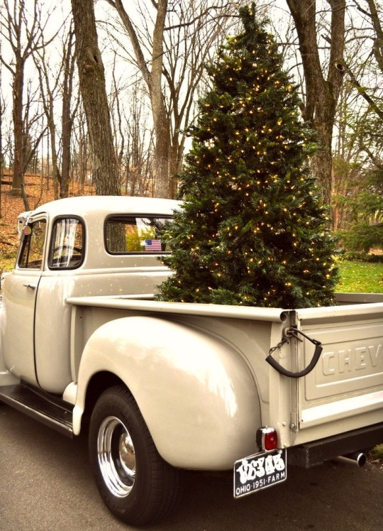 christmas tree in back of old chevy pickup truck