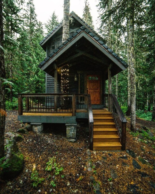 cabin with tree that goes through roof