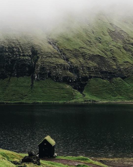 mossy cabin near lake