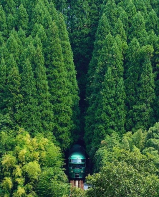 train coming out from forest