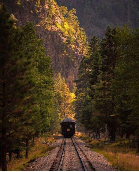 train moving through trees