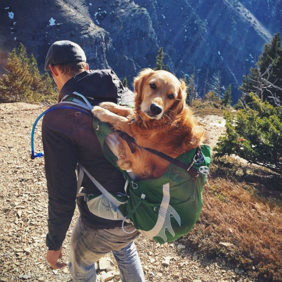 man carrying dog on back