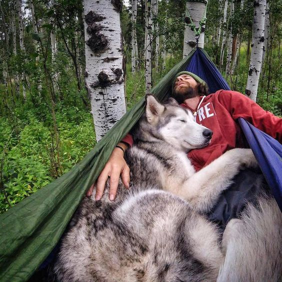 man relaxing with husky dog in hammock