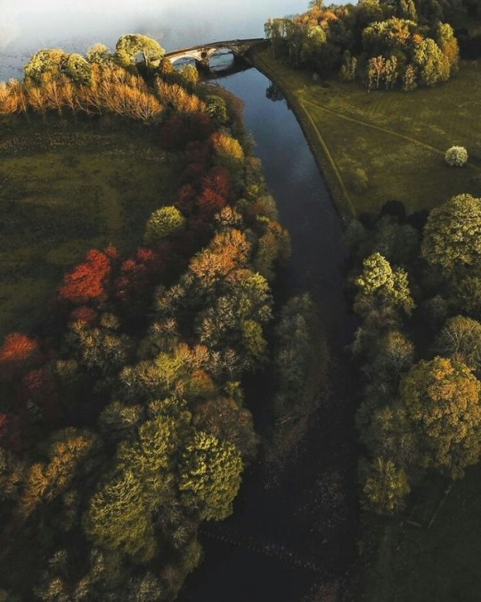 river and trees