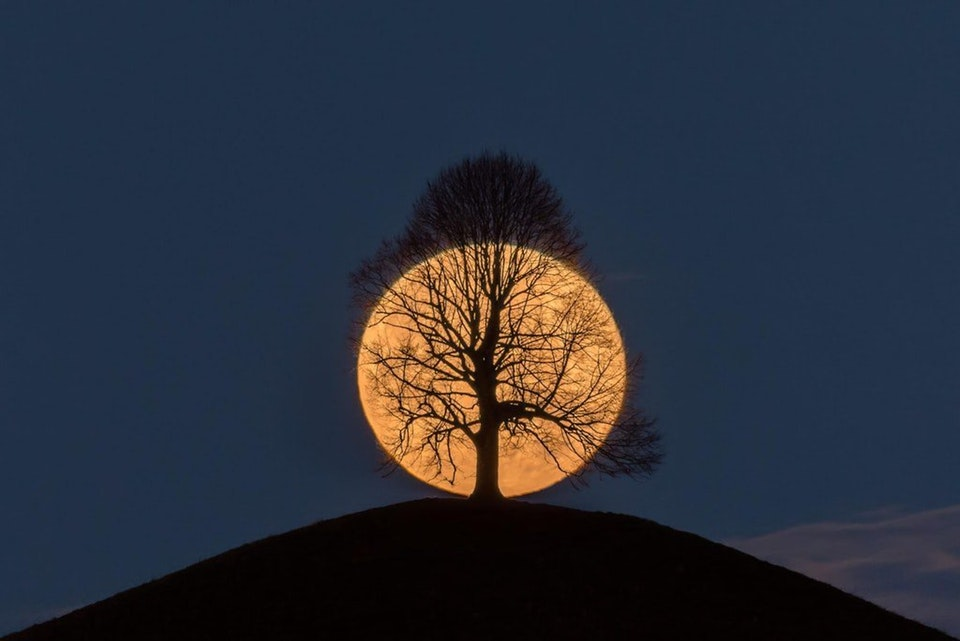 full moon behind tree on hill