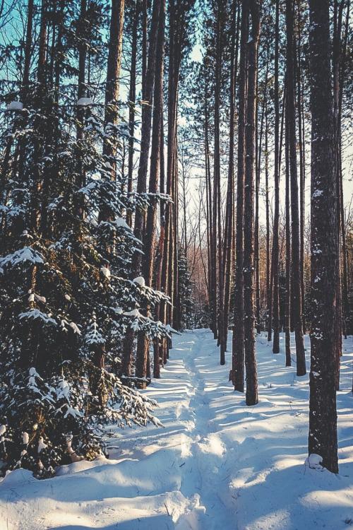 snowy trail through woods