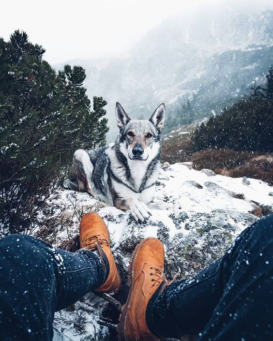 husky sitting with man in the snow