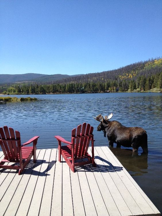 moose standing close to deck