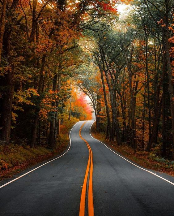 road and fall trees