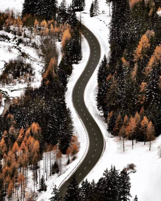 road through snow covered forest
