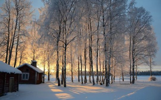 cold sunrise woods and cabin